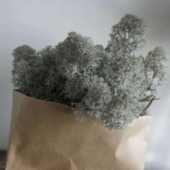 Preserved Reindeer Moss – Grey – 25g Made with Moss Green