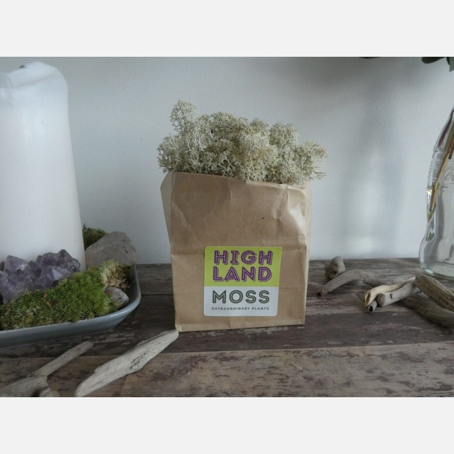 Ripper Productions – Preserved Moss – 1.5kg Ice Blue | 1.5kg Bordeaux | 100g Autumn | 100g Russet Made with Moss Green 4