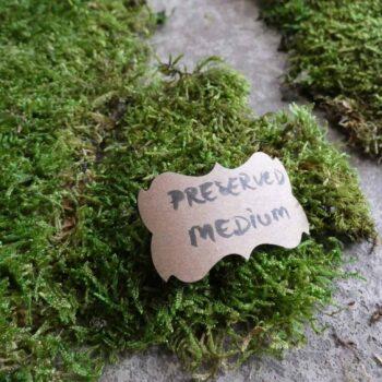 Preserved Green Carpet Sheet Moss Preserved Moss