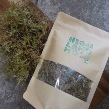 Fresh Live Feather Moss – 25g Fresh Moss fresh moss 4