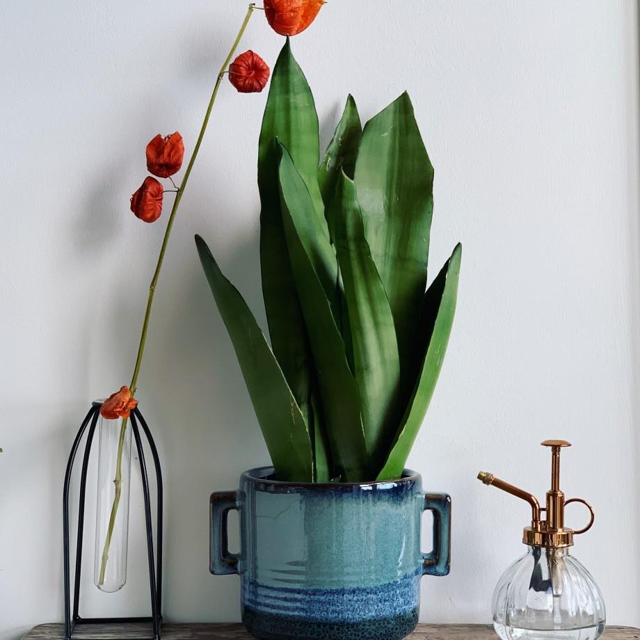 Moonshine Snake Plant | Sansevieria Trifasciata | Mother In Laws Tongue | 12cm | 40cm Houseplants 6
