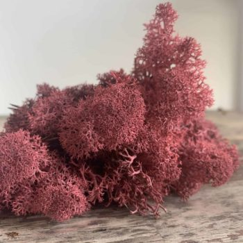 Preserved Reindeer Moss – Bordeaux – 25g Made with Moss plant decoration