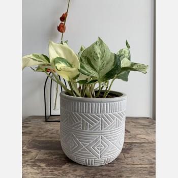 Burolo planter for 12cm pots Planters 12cm planter
