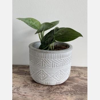 Burolo planter for 9cm pots Planters 9cm planter