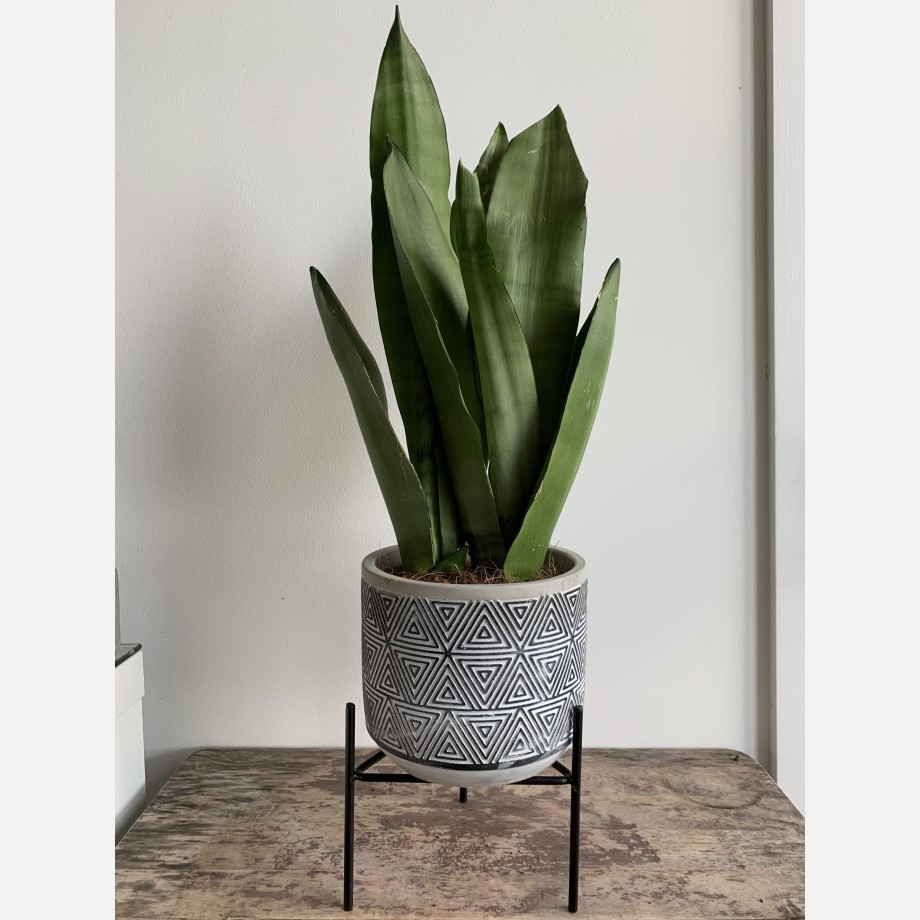 Inca Planters on Stands for up to 12cm pots – 3 Designs Available Planters 6