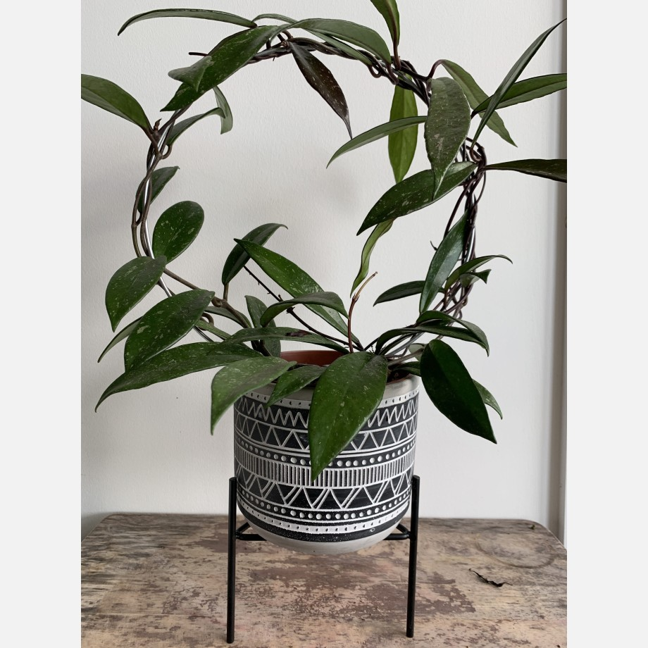 Inca Planters on Stands for up to 12cm pots – 3 Designs Available Planters 8