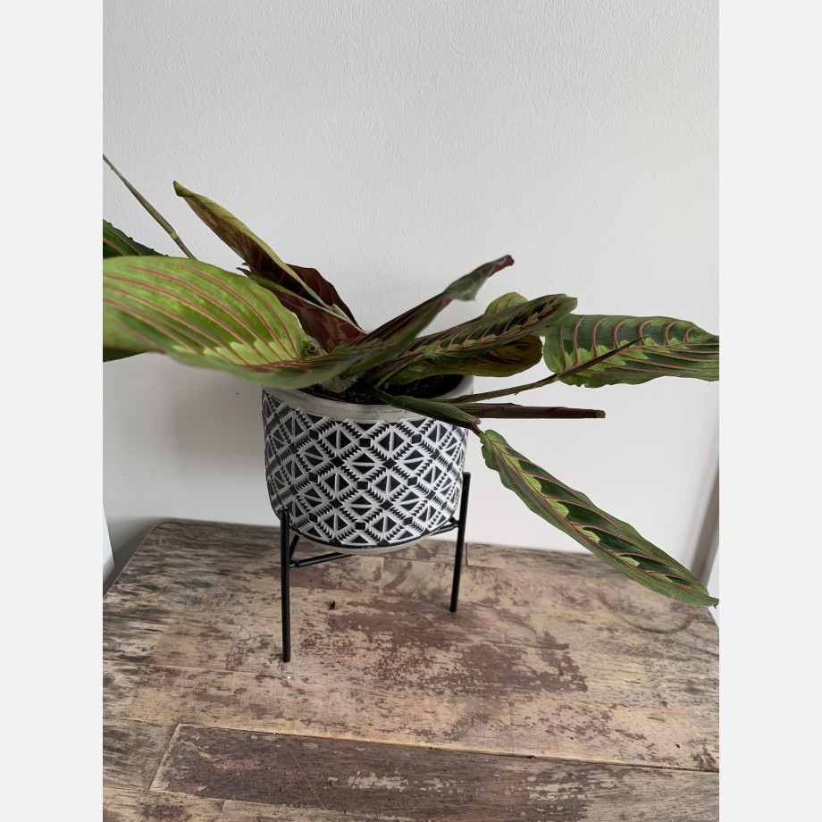 Inca Planters on Stands for up to 12cm pots – 3 Designs Available Planters 9