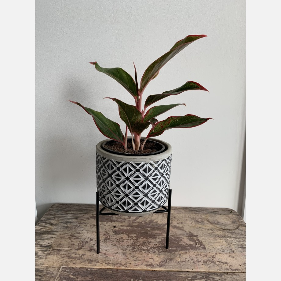 Inca Planters on Stands for up to 12cm pots – 3 Designs Available Planters 10