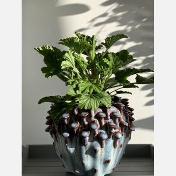 Blue 'toadstool' Planter for up to 11cm pots Plant Accessories 11cm planter 2