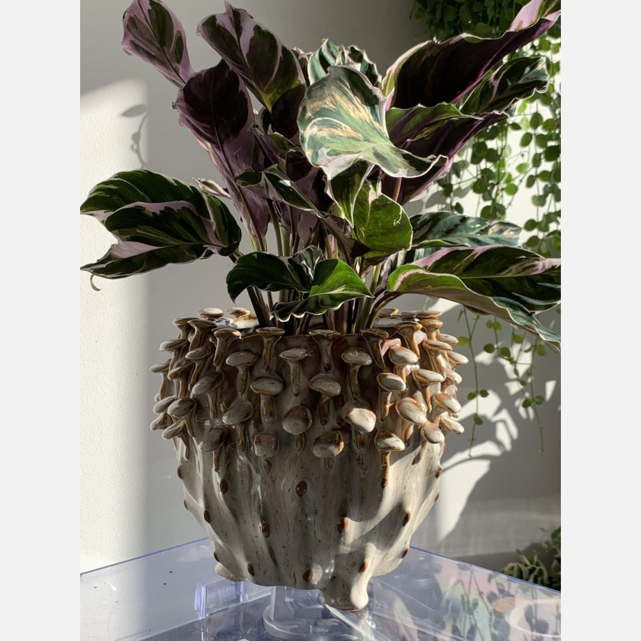 Brown 'toadstool' Planter for up to 15cm pots Plant Accessories 5
