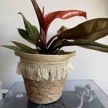 Big Frilly Basket Planter for up to 18cm Pots Plant Accessories 18cm planter 2