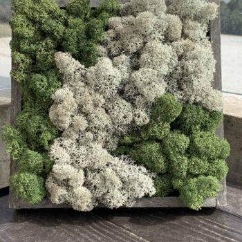 Time of the Season in Wood Frame –  8″ x 8″ Moss Art moss art