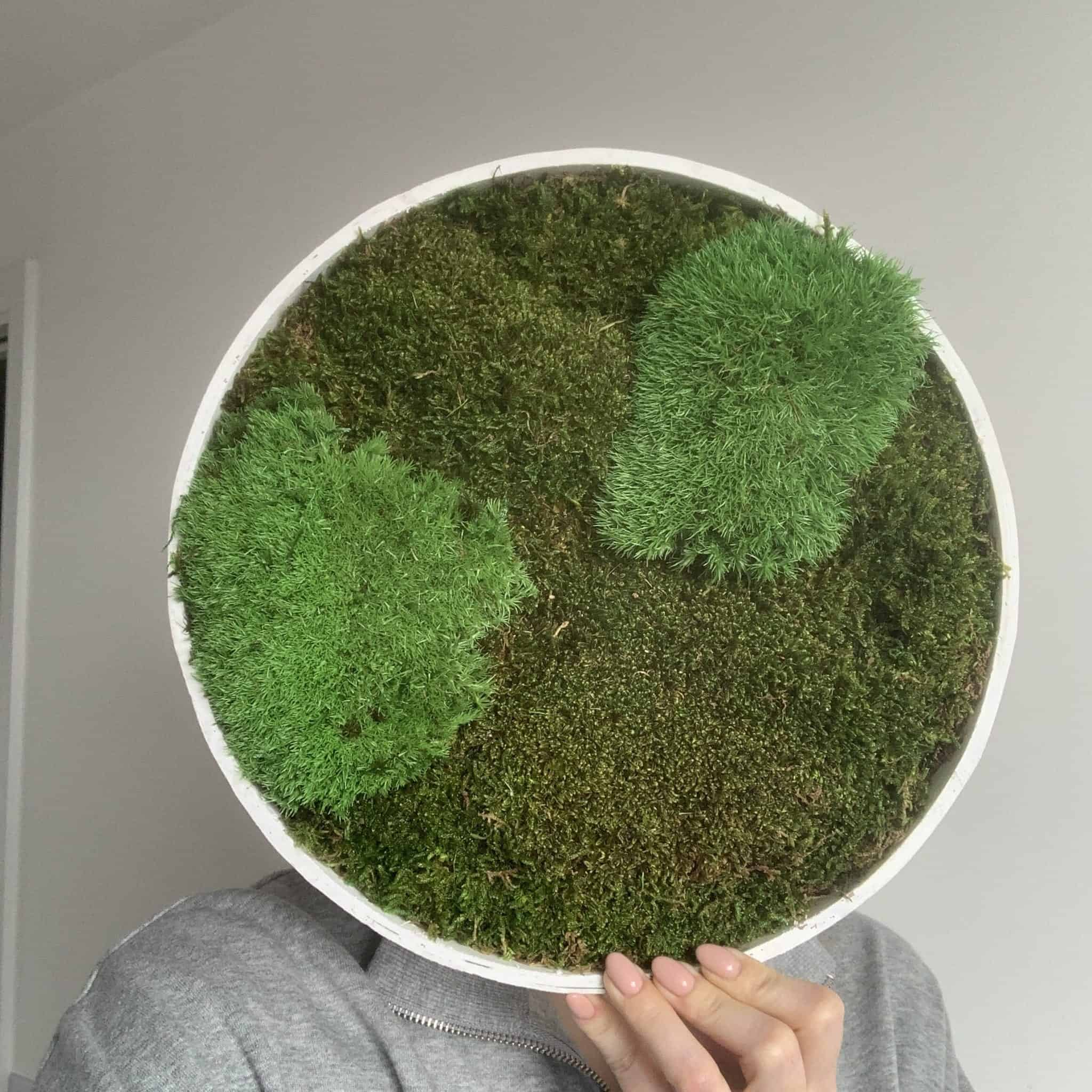 Circle of Life in Wood Frame -  12