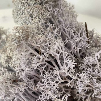 Preserved Reindeer Moss – Lavender Blue Made with Moss plant decoration