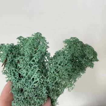 Preserved Reindeer Moss – Pacific Green – 25g Made with Moss plant decoration