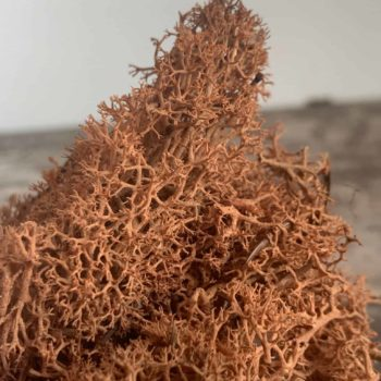 Preserved Reindeer Moss – Russet- 25g Made with Moss plant decoration