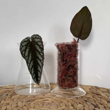 Lab Beakers for propagation | Conical or Straight Plant Accessories propagation station