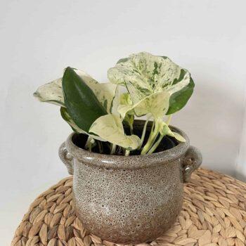 Jug design planter for 12 – 12.5cm plant pots Plant Accessories