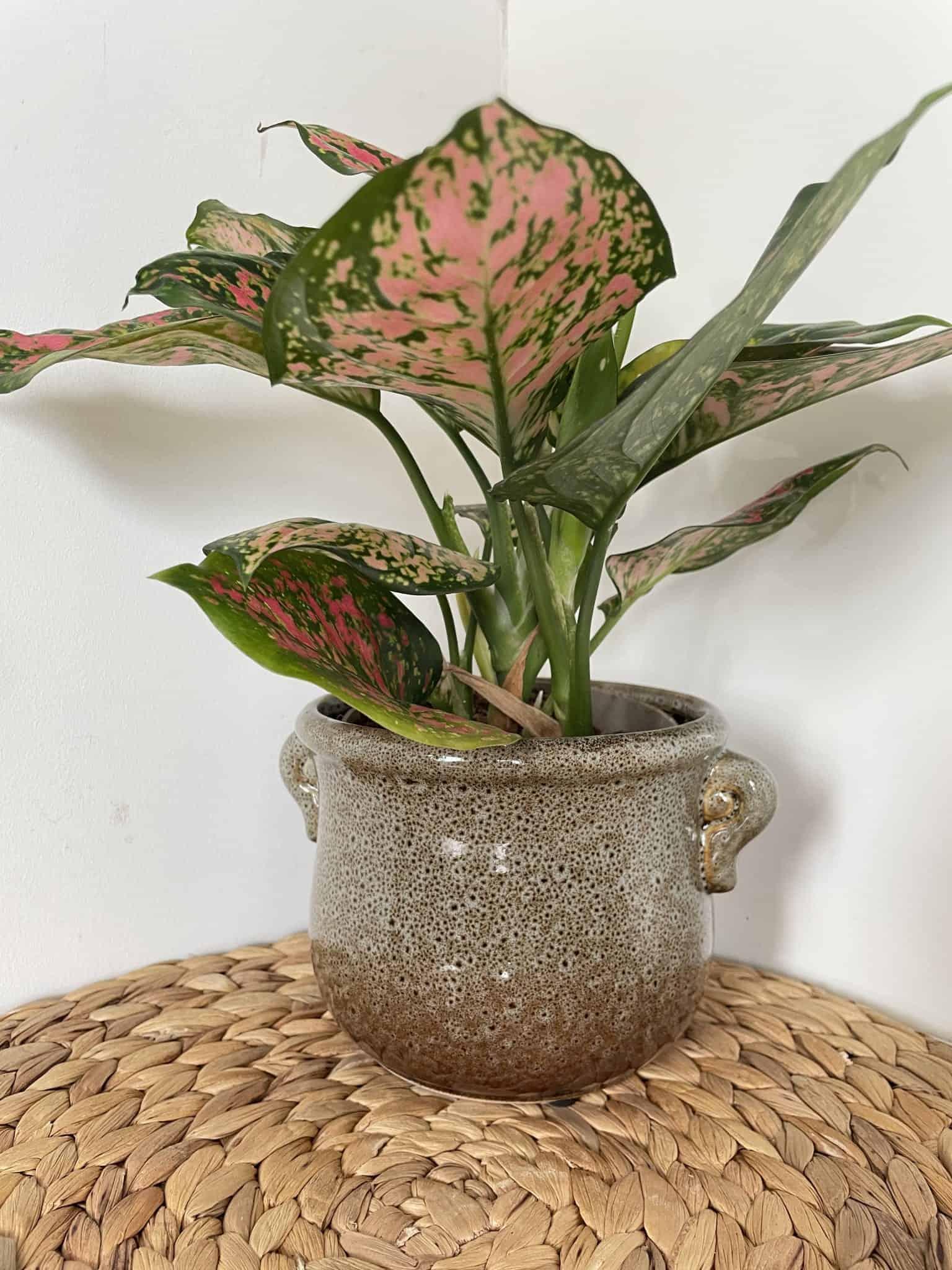 Jug design planter for 12 - 12.5cm plant pots