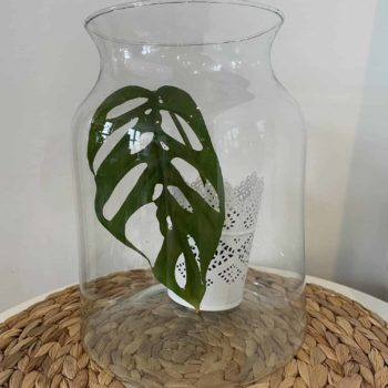 Large Glass Vase Bowls vase