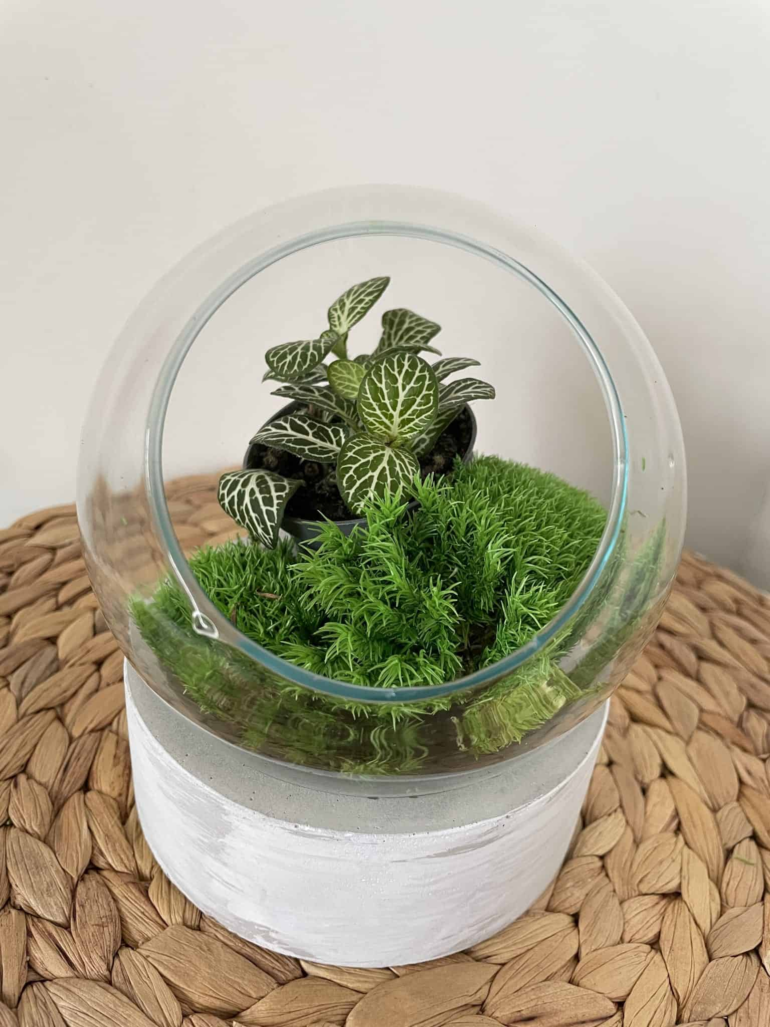 Fishbowl with Cement Base
