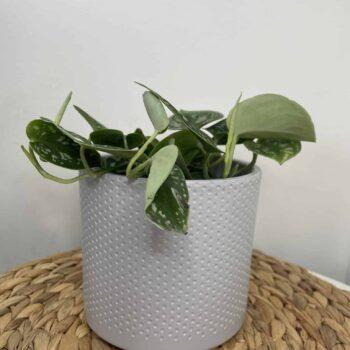 Grey planter with subtle dot design for up to 12cm pots Plant Accessories 12cm planter