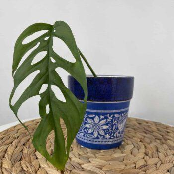 Marina Planters, Dutch Style for pots up to 9cm Planters 9cm planter