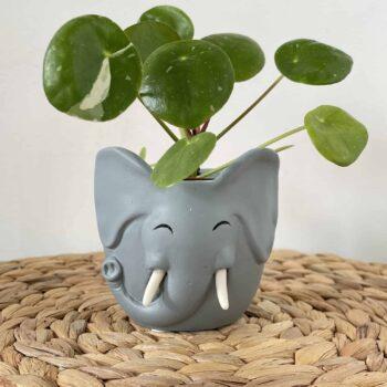 Elephant Planter for 6cm pots Plant Accessories 6cm planter