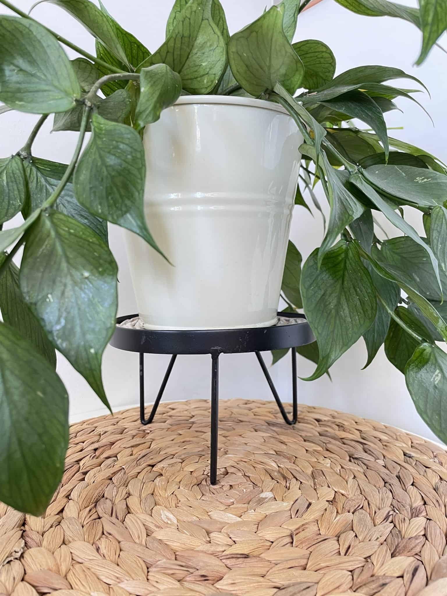 Plant Stand for up to 15cm Pots