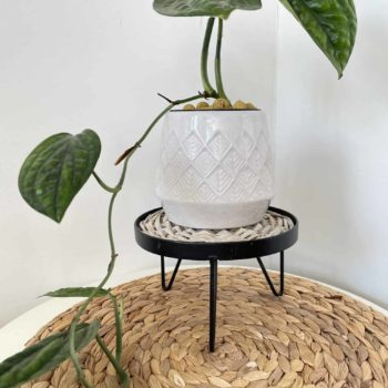 Plant Stand for up to 15cm Pots Plant Accessories 12cm stand