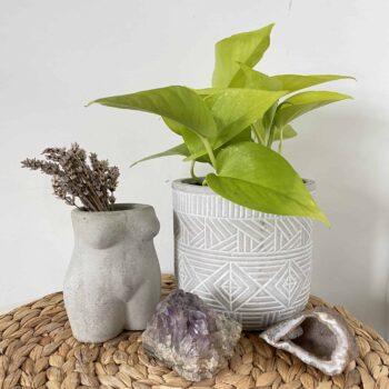 Scindapsus Neon Pothos in 12cm pot Hanging & Trailing 12cm plant 2