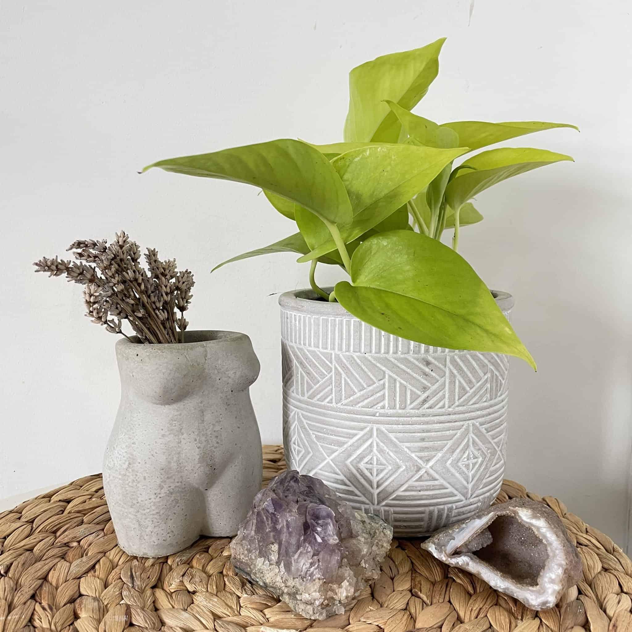 Scindapsus Neon Pothos in 12cm pot