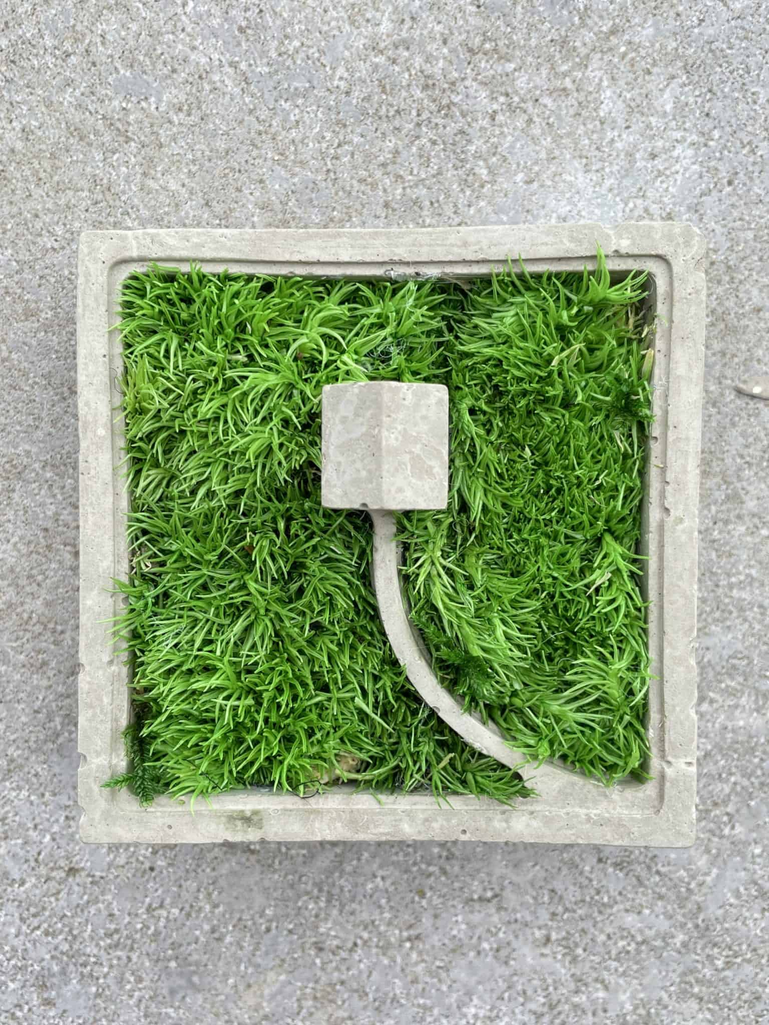 Concrete House in the Moss