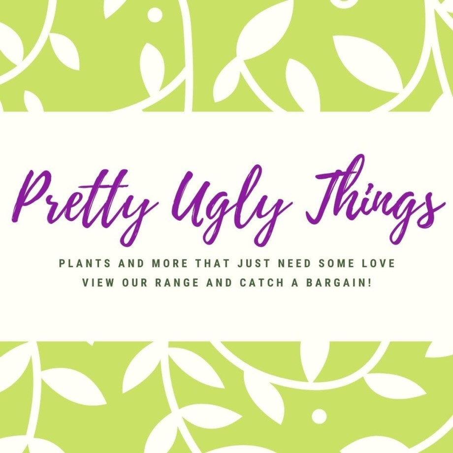 Pretty Ugly Things - Imperfect Products