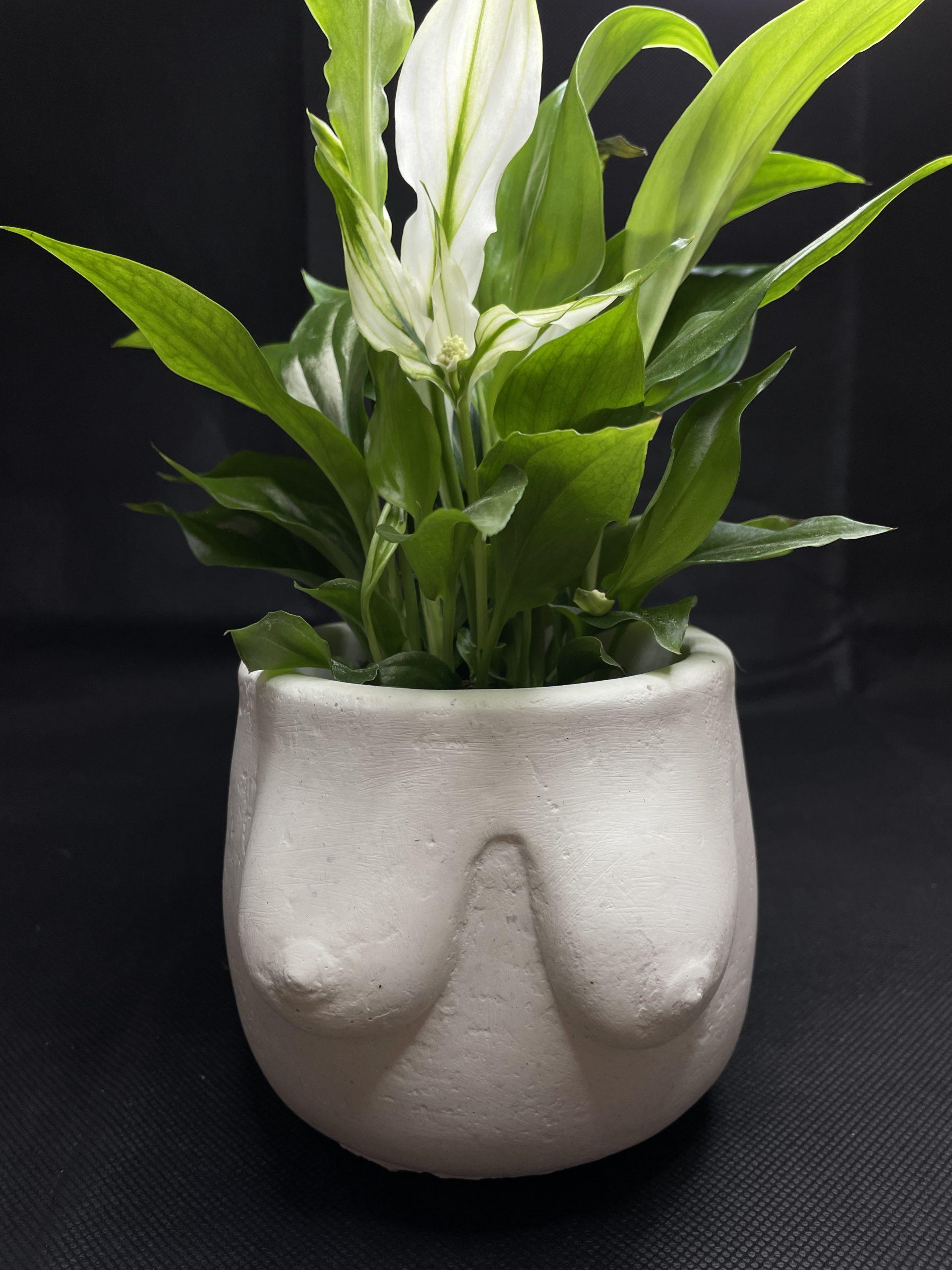 Concrete Booby Planter for up to 8cm plant pots