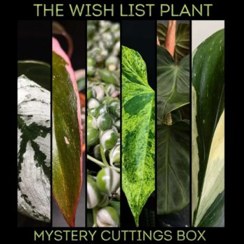 Wishlist Mystery Cuttings Box – Min 2 of our most valuable cuttings Cuttings cuttings