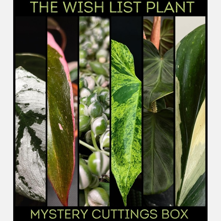 Wishlist Mystery Cuttings Box - Min 2 of our most valuable cuttings