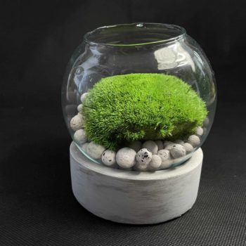 Preserved Moss Fish Bowl on Cement Base Artwork fishbowl moss bowl