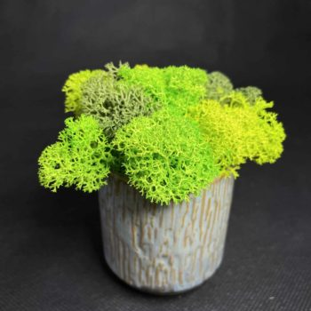 Preserved Mini Moss Pot   Green Reindeer Moss Artwork premade moss bowl