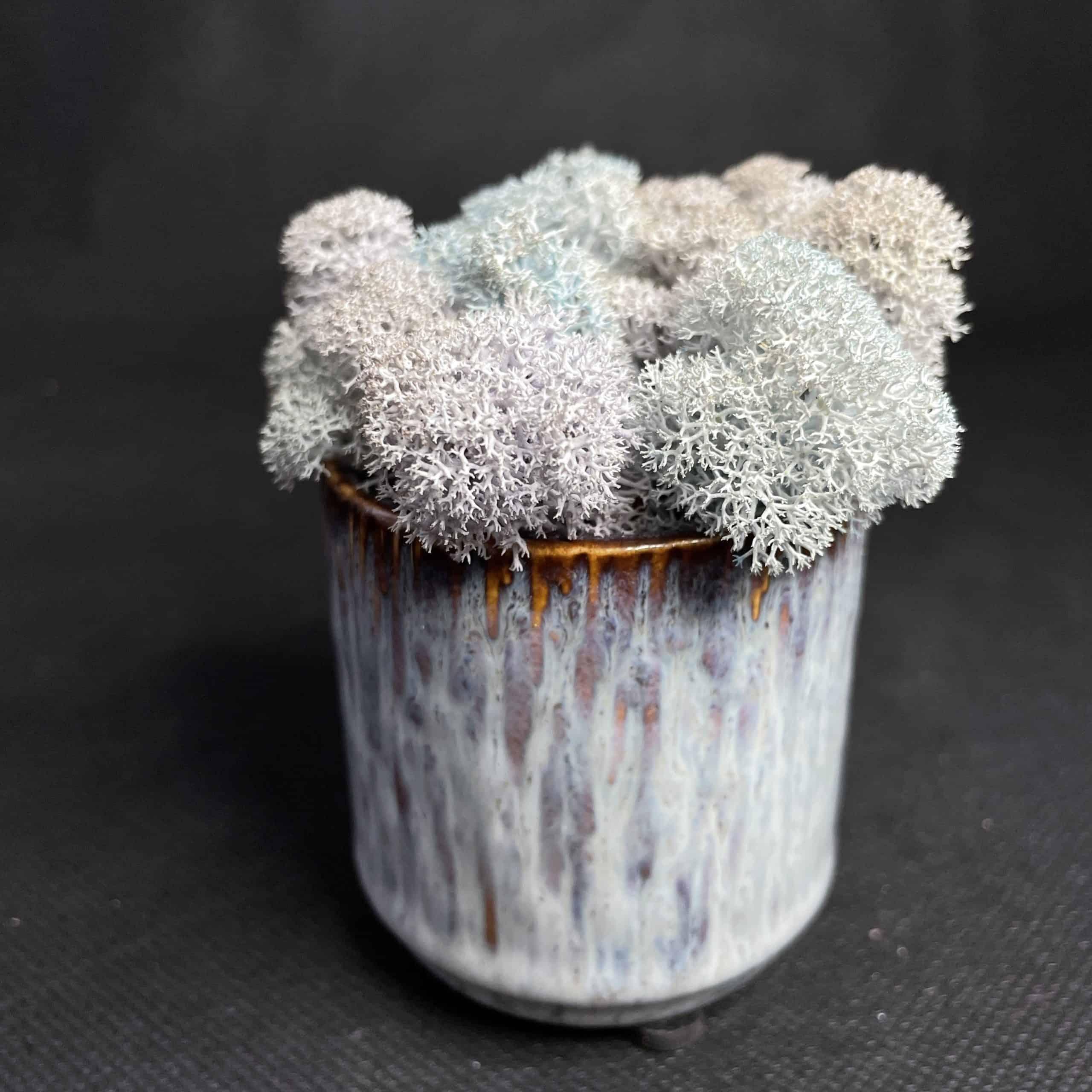 Preserved Mini Moss Pot | Natural and Grey Reindeer Moss