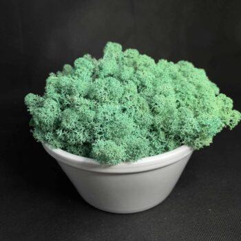 Preserved Moss Bowl | Pacific Green Reindeer Moss | White Bowl Artwork premade moss bowl