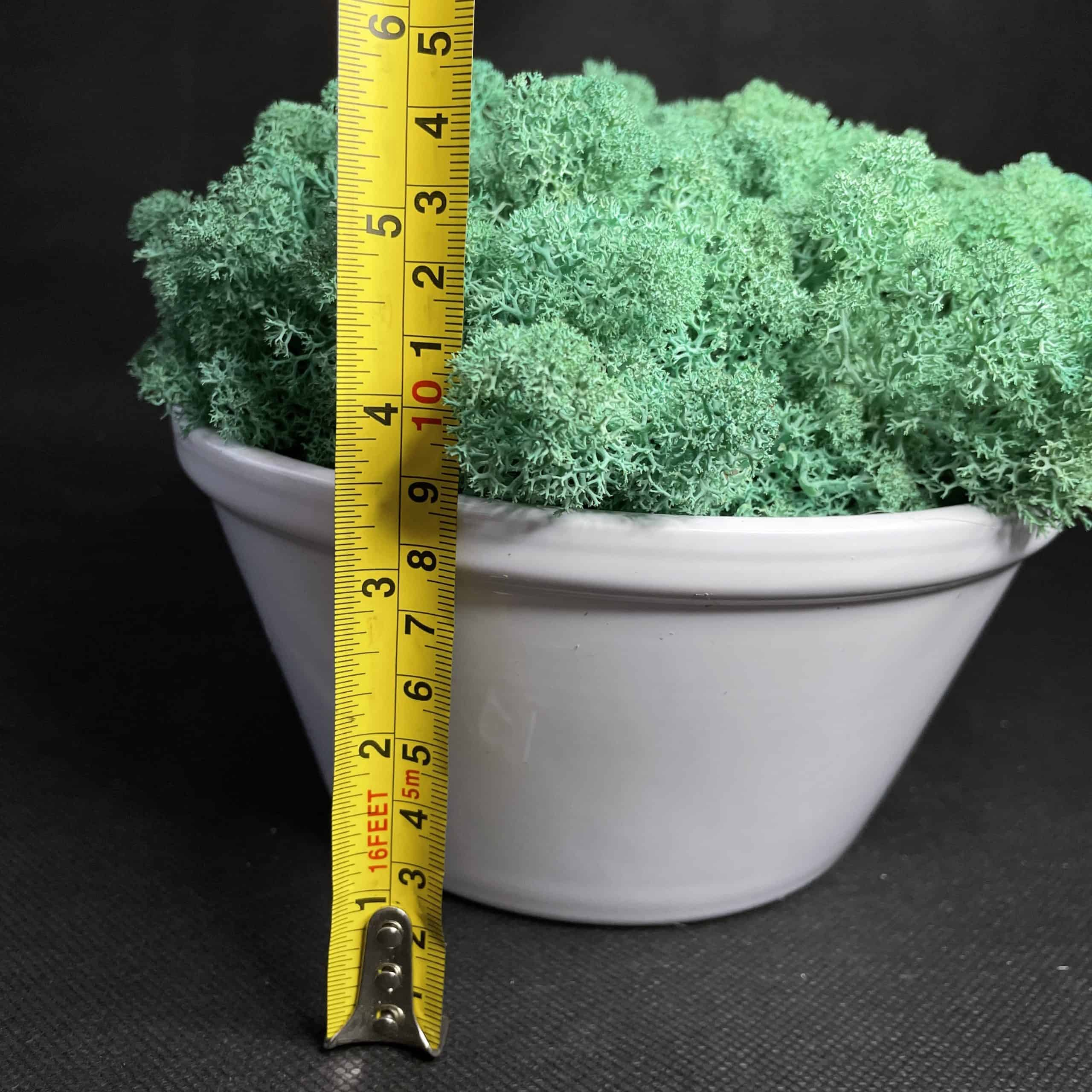 Preserved Moss Bowl   Pacific Green Reindeer Moss   White Bowl