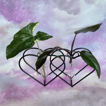 Double Heart Metal Propagation station with FREE mystery cutting Plant Accessories cuttings