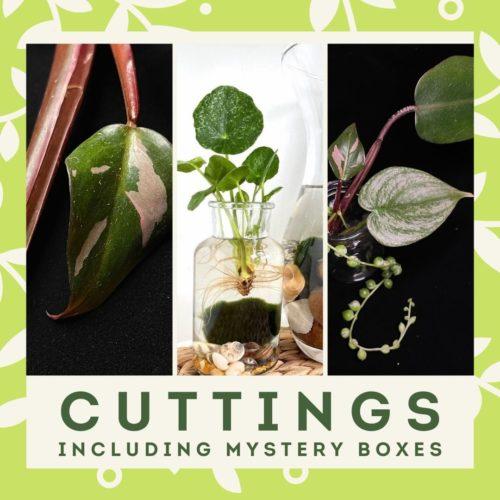 cuttings menu block 2