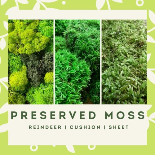 preserved moss menu block