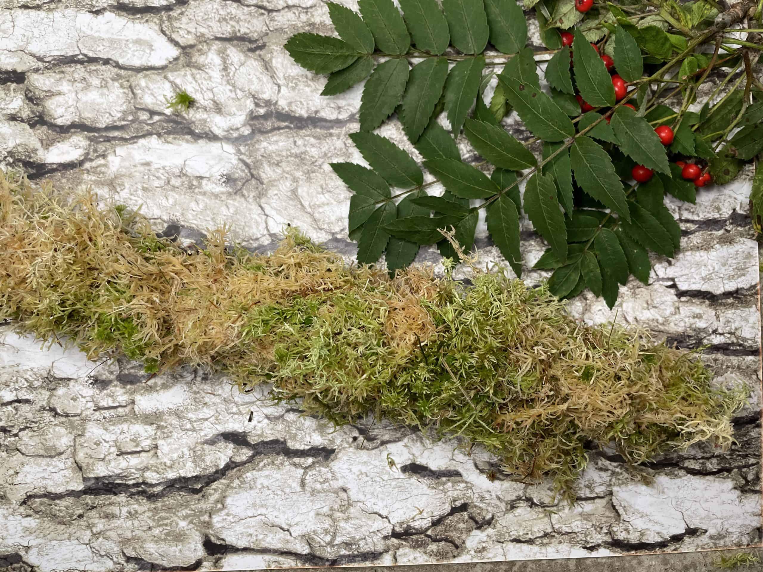 fresh moss pole