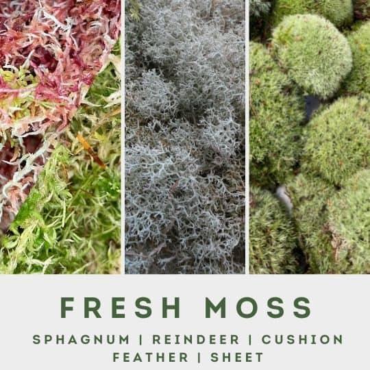 fresh moss menu block